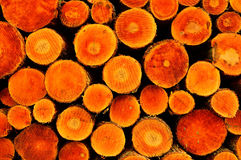 The trunks of trees on forest felling Royalty Free Stock Image