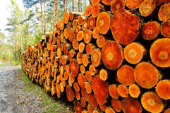 The trunks of trees on forest felling Stock Photos