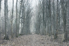 Trunks of trees without leaves, background Royalty Free Stock Photo