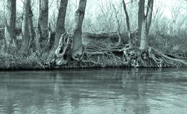 Trunks of trees at the river Stock Photo