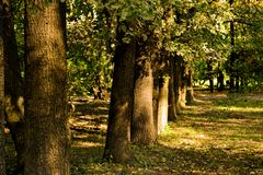 Trunks of the trees. In the autumn light Royalty Free Stock Photo