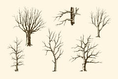 Trunks of trees vector set. Trees without leaves, hand drawing sketch. Trunks and branches of different types of trees, vector set stock illustration