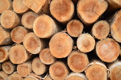 Trunks. Waiting in a forestry industry Stock Image