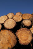 Trunks of wood. Some trunks of wood outdoors with blue sky Royalty Free Stock Photos
