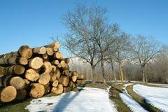 Truns dell'albero tagliati sulla neve Fotografie Stock Libere da Diritti