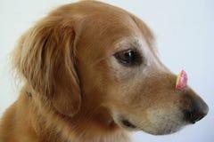 Truque do cão Fotos de Stock