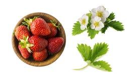 Truskawka i truskawka kwitniemy z liśćmi na białym tle Dojrzały truskawki zakończenie Tło jagoda Słodki i soczysty s Zdjęcia Stock