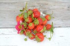 truskawka organicznych Fotografia Royalty Free