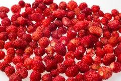 Truskawki, marznąć Makro-, marznąć organicznie truskawki, handfu Zdjęcie Royalty Free
