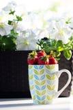 Truskawki w filiżance czerwone truskawki w filiżance Zdjęcie Stock