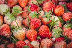 Truskawkowe jagody świeże od gospodarstwa rolnego Obraz Stock