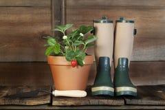 Truskawkowej rośliny i ogródu buty Fotografia Stock
