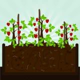 Truskawkowy drzewo i kompost Zdjęcia Stock