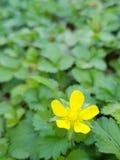 Truskawkowy kwiat obraz royalty free