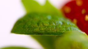 Truskawkowy liść Zdjęcia Royalty Free
