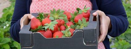 truskawkowy sweet Fotografia Stock