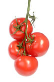 Truss of tomatoes Stock Image