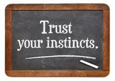 Trust your instincts Royalty Free Stock Images
