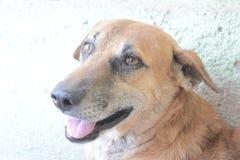 Trustable pies zdjęcia stock