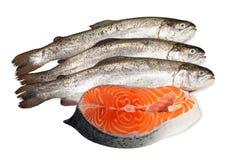 Truta fresca e bife salmon Imagem de Stock Royalty Free