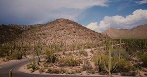 Truteń lata backwards od pustynnego wzgórza i pustego drogowego rozwidlenia w wielkim kaktusa polu przy pogodną Arizona parka nar zbiory wideo