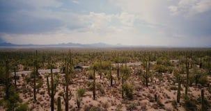 Truteń latająca depresja nad piękną kaktus pustyni doliną, pickup samochodowy chodzenie obok wzdłuż drogi w Arizona parka narodow zbiory wideo