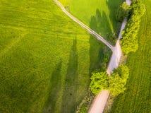 Truteń fotografia rozdroże Między drzewami w Kolorowym Wczesnym Spr zdjęcia stock