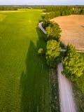 Truteń fotografia rozdroże Między drzewami w Kolorowym Wczesnym Spr zdjęcie royalty free