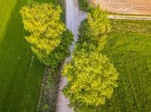 Truteń fotografia rozdroże Między drzewami w Kolorowym Wczesnym Spr obraz stock