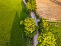 Truteń fotografia rozdroże Między drzewami w Kolorowym Wczesnym Spr obraz royalty free