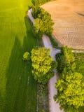 Truteń fotografia rozdroże Między drzewami w Kolorowym Wczesnym Spr fotografia stock
