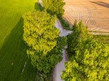 Truteń fotografia rozdroże Między drzewami w Kolorowym Wczesnym Spr obrazy stock