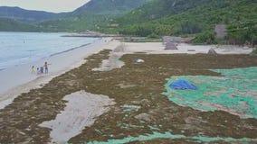 Truteń lata blisko do ludzi taktuje algi na plaży morzem zdjęcie wideo