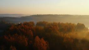 Truteń lata nad epickim jesień lasem i jeziorem, drzewa zakrywa z mgłowej mgły Amaing zmierzchu pokojową naturą zbiory wideo