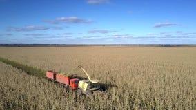 Truteń lata nad kukurydzanym żniwiarzem nalewa silomass w ciężarówkę zdjęcie wideo