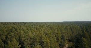 Truteń lata nad malowniczym lasowym widokiem Powietrzni 4K ptaki przyglądają się strzał lato liścia jasnozieloni treetops i mała  zbiory
