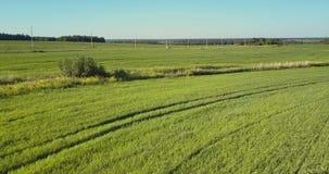 Truteń lata szybko nad śladami krzyżuje pole i żleb zdjęcie wideo