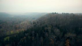 Truteń latająca wysokość nad bujny jesieni mgłowy las, piękny parka narodowego rezerwat przyrody w Sigulda, Latvia zbiory wideo