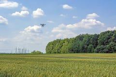 Truteń na słonecznym dniu przeciw chmurom nad pszenicznym polem i niebu zdjęcie royalty free