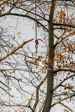 Truteń obniża na arkanie po ratującego od treetop obraz stock