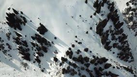 Truteń usuwa śnieżnych szczyty góry w świerkowych lasach przy 90 stopniami zdjęcie wideo