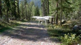 Truteń zbliża się kamerę w Alpejskim lesie zbiory