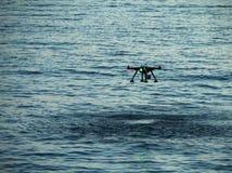 Truteń na wodzie Zdjęcie Royalty Free