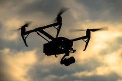 Truteń sylwetki latanie w wieczór niebie Zdjęcie Stock