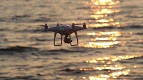 Trutnia latania błyskotania światło słoneczne na morzu zbiory