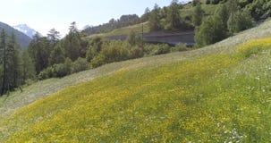 Trutnia lot nad zieloną trawą i polem kwiaty w Europejskich Alps 4K zdjęcie wideo