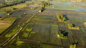 Trutnia lub ptaka eyeview Bali Rice pole obrazy royalty free