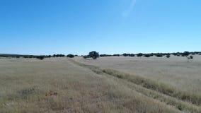 Trutnia materiał filmowy Kalahari zdjęcie wideo