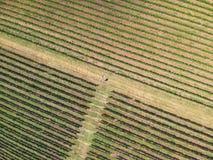 Trutnia widok wytwórnia win w Turda, Rumunia fotografia royalty free
