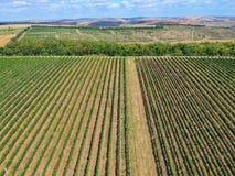 Trutnia widok wytwórnia win w Turda, Rumunia zdjęcia royalty free